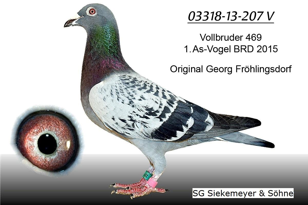 http://tauben-siekemeyer.de/auktion//03318-13-207-V_Froehlingsdorf.jpg